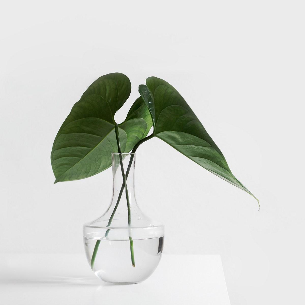 Vase mit Blättern Placeholder