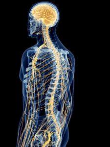 Schmerztherapie Rücken Dorn Breuss